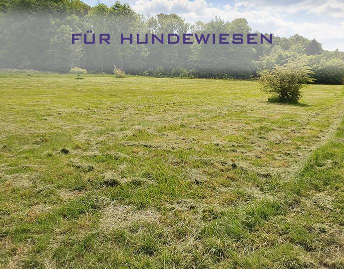 Hundewiesen in Wetter (Ruhr)